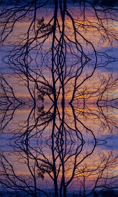 Árvore contínua | Atibaia | Jaime Scatena